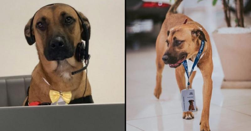 https: img.okezone.com content 2020 08 19 612 2264739 sering-berkunjung-anjing-ini-dapat-pekerjaan-dari-bos-dealer-mobil-5FFfonSHeU.jpg