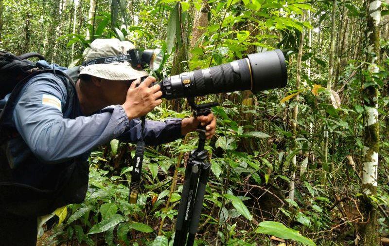 https: img.okezone.com content 2020 08 22 406 2265706 birdwatching-di-hutan-tambrauw-wisata-alam-yang-asyik-dan-menantang-2H16mL5h9f.jpg