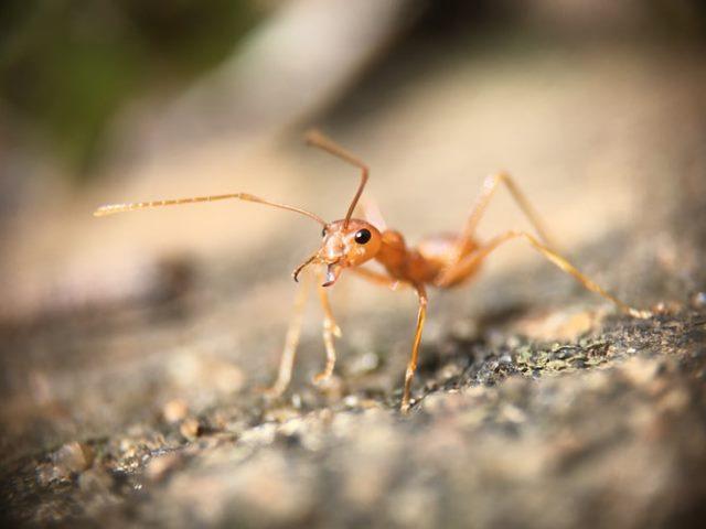 https: img.okezone.com content 2020 08 25 614 2267116 alquran-dan-sains-buktikan-semut-sangat-kompak-serta-ajarkan-toleransi-tinggi-mkyzoXqpPy.jpg