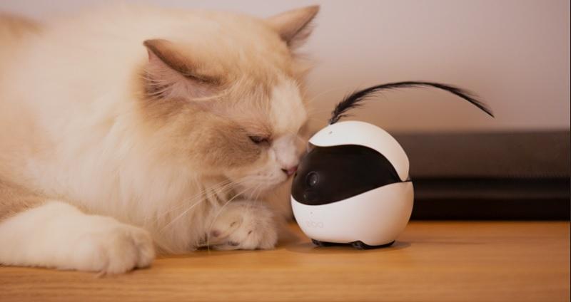 https: img.okezone.com content 2020 08 26 612 2268025 keren-robot-canggih-ini-bisa-ajak-main-kucing-saat-pemiliknya-pergi-2yhq7oRPOG.jpg