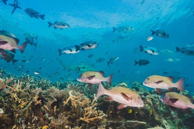 https: img.okezone.com content 2020 08 26 614 2267463 alquran-dan-sains-jelaskan-keberadaan-ikan-laut-serta-fungsi-siripnya-tSOC1cBkH5.jpg