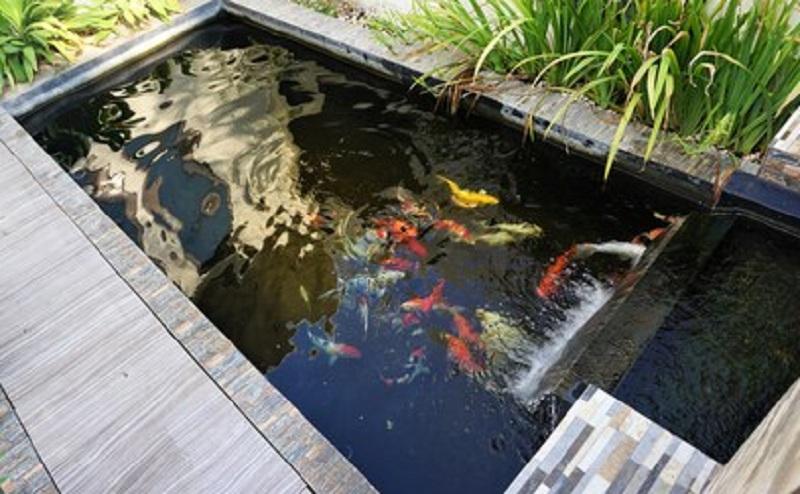 6 Jenis Kolam Air Minimalis Yang Dapat Bikin Rumah Tenang Okezone Economy