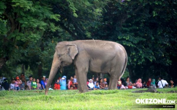https: img.okezone.com content 2020 09 01 408 2270875 6-tips-membawa-si-kecil-liburan-ke-kebun-binatang-HlqgPyaBol.jpg