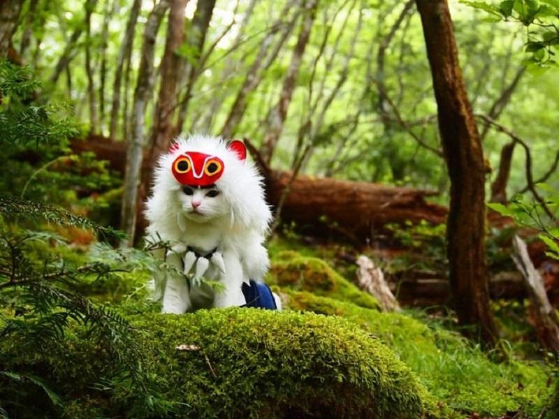 https: img.okezone.com content 2020 09 02 612 2271611 penampilan-kucing-saat-mengenakan-kostum-cosplay-DtL2Vpcfsj.jpg