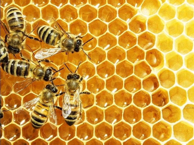 https: img.okezone.com content 2020 09 03 481 2271819 kabar-baik-racun-lebah-madu-bisa-tumpas-sel-kanker-payudara-4sXOYX4Q4P.jpg