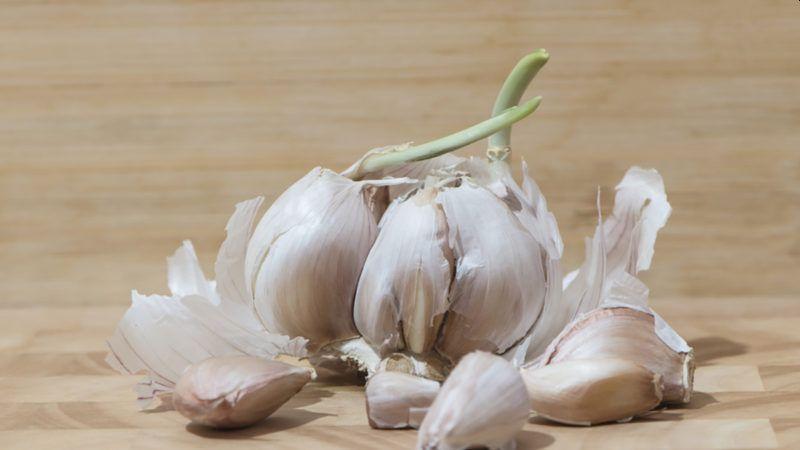 Cara Menghilangkan Jerawat Dengan Bawang Putih Dan Putih Telur