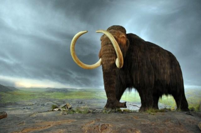 https: img.okezone.com content 2020 09 07 16 2273786 lebih-dari-500-spesies-hewan-terancam-punah-pada-abad-ini-SqILXpDDVA.jpg