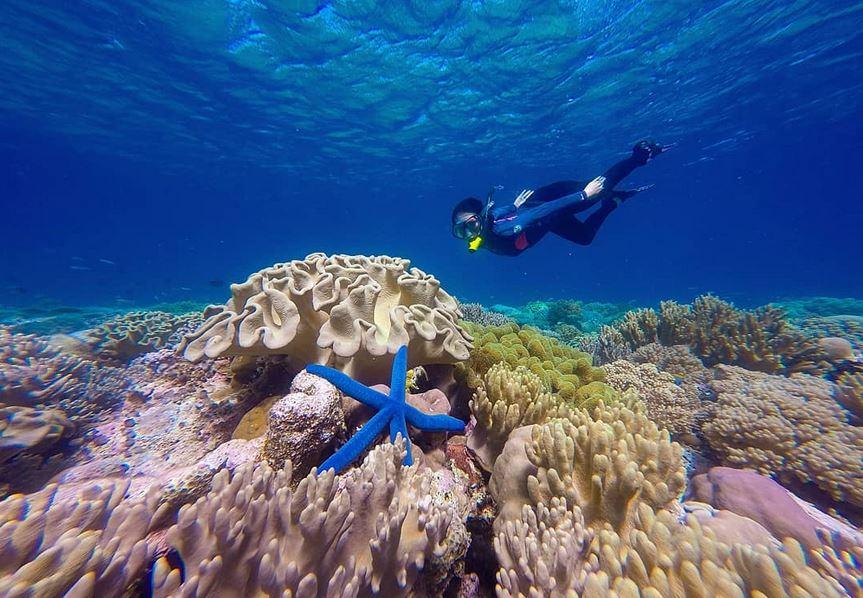 https: img.okezone.com content 2020 09 13 408 2276967 7-destinasi-eksotis-di-wakatobi-surga-bawah-laut-yang-memukau-dunia-rHsAKIWlcQ.JPG