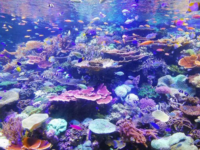 https: img.okezone.com content 2020 09 15 16 2278075 suhu-bumi-bertambah-panas-banyak-spesies-laut-sulit-beradaptasi-mmwWtR5WE9.jpg