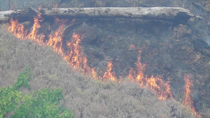 https: img.okezone.com content 2020 09 16 340 2278470 hutan-lindung-di-sika-ntt-terbakar-8Inzy1afIs.jpg