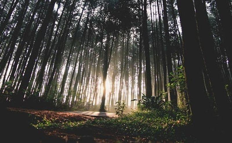 https: img.okezone.com content 2020 09 16 408 2278526 menikmati-wisata-gunung-pancar-berburu-foto-hingga-mandi-air-hangat-bwn7idOEgL.jpg