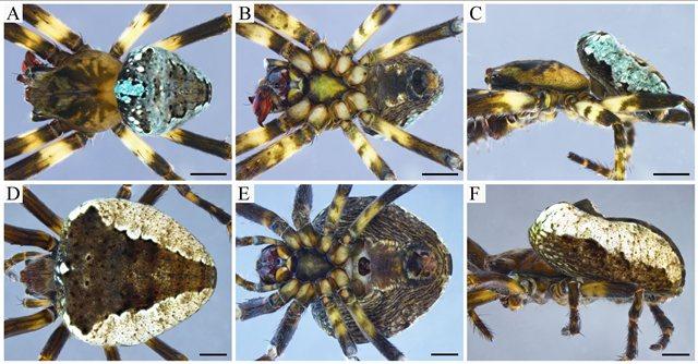 https: img.okezone.com content 2020 09 17 16 2279623 peneliti-temukan-spesies-baru-laba-laba-dengan-organ-reproduksi-berbeda-wAvkV1LCnQ.jpg
