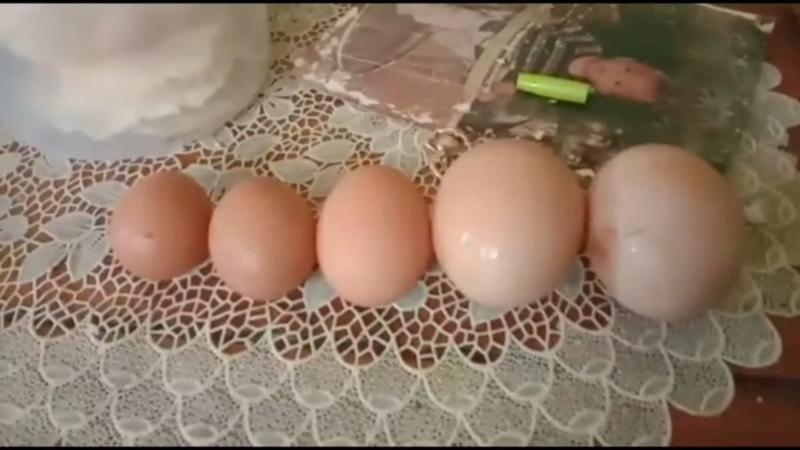 https: img.okezone.com content 2020 09 21 525 2281071 unik-ayam-keluarkan-telur-raksasa-keluar-1-kali-dalam-3-hari-cxObMH6IaO.jpg