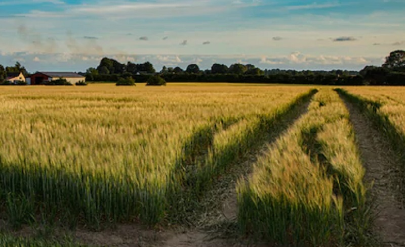 https: img.okezone.com content 2020 09 22 320 2281770 begini-cara-cegah-lahan-pertanian-jadi-perumahan-93FBl9KqyR.jpg
