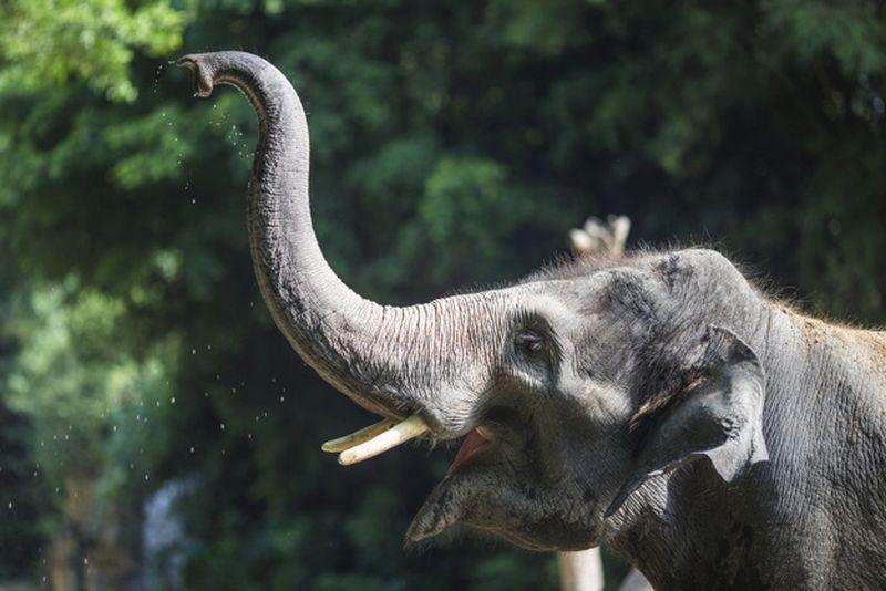 https: img.okezone.com content 2020 09 22 406 2281610 bayi-gajah-gemas-lahir-di-plg-minas-riau-menteri-siti-namanya-rizki-2uYhl1NwAJ.jpg