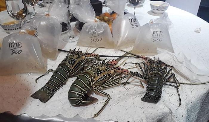 https: img.okezone.com content 2020 09 24 320 2283011 palsukan-data-izin-14-eksportir-lobster-dicabut-U9i4iEXMjv.jpg
