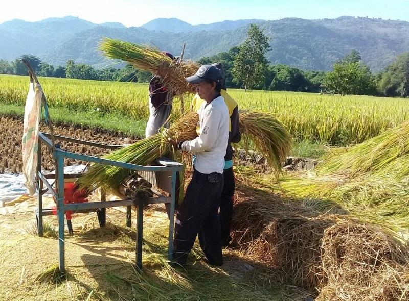 https: img.okezone.com content 2020 09 25 1 2283568 propaktani-perubahan-pola-pertanian-baru-dengan-perbaikan-aspek-manajemen-34O8mnf5IL.jpg