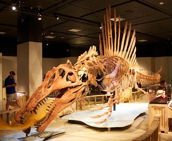 https: img.okezone.com content 2020 09 26 16 2284211 spinosaurus-si-monster-sungai-diyakini-hidup-100-juta-tahun-lalu-n5J28ZSu8k.jpg