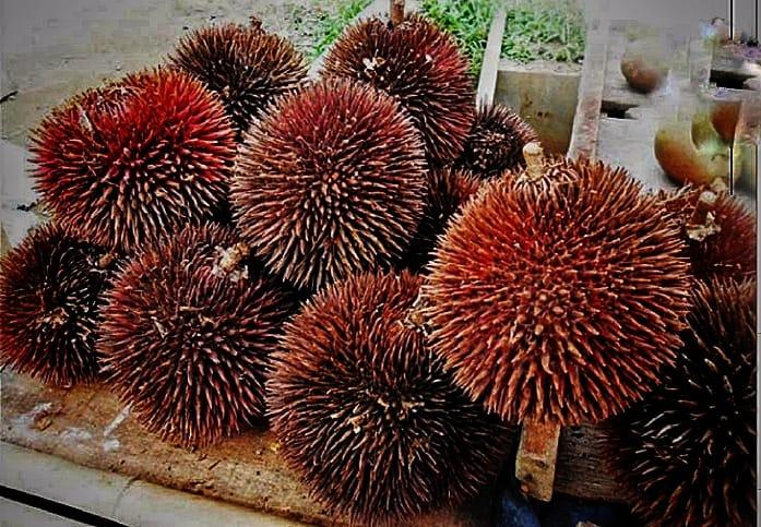 https: img.okezone.com content 2020 09 27 320 2284456 buah-langka-ini-lezat-mirip-dengan-durian-sumbernya-di-kalimantan-LKepgmMdOA.jpg