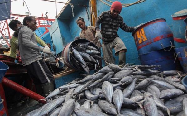 https: img.okezone.com content 2020 09 27 320 2284514 cuaca-ekstrem-bikin-tangkapan-ikan-nelayan-berkurang-hingga-50-Pow18TfSEs.jpg