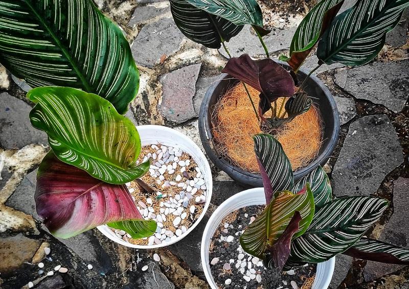 https: img.okezone.com content 2020 09 27 470 2284398 4-jenis-tanaman-hias-yang-bisa-ditanam-di-rumah-btPxpAzw97.jpg
