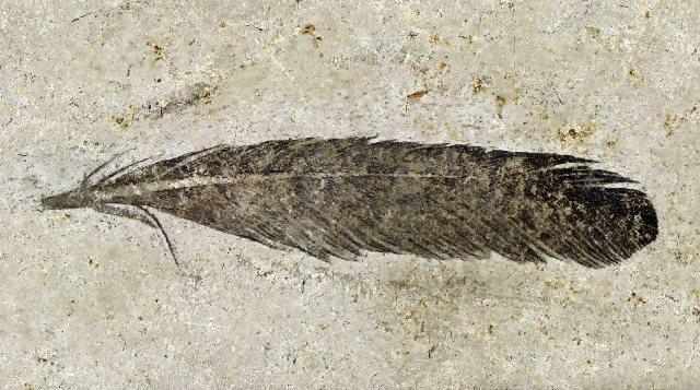 https: img.okezone.com content 2020 10 01 16 2286702 peneliti-ungkap-pemilik-fosil-bulu-pertama-yang-pernah-ditemukan-lpgB4PNP9k.jpg