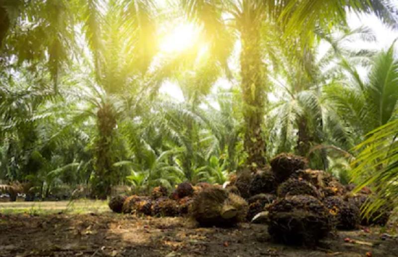 https: img.okezone.com content 2020 10 01 320 2286725 sri-mulyani-sebut-kelapa-sawit-bisa-tekan-impor-PNuTYFU87m.jpg