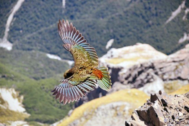 https: img.okezone.com content 2020 10 02 16 2287139 keahlian-burung-saat-terbang-dijelaskan-dalam-alquran-dan-sains-6Q35vTsNUj.jpg