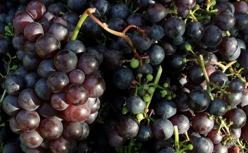 https: img.okezone.com content 2020 10 04 455 2288174 belajar-tanam-ke-ukraina-kini-faiz-punya-kebun-anggur-sendiri-1tiSsiofAG.jpg