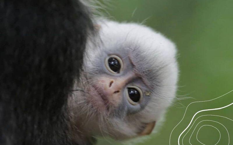 https: img.okezone.com content 2020 10 04 620 2288262 world-animal-day-saatnya-traveler-ikut-sejahterakan-satwa-PC7bc5asvB.jpg