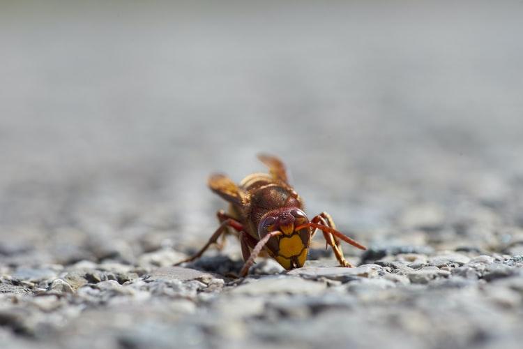 https: img.okezone.com content 2020 10 05 16 2288464 ditemukan-6-lebah-pembunuh-di-amerika-petugas-lacak-sarangnya-GX4PQFQSvE.jpg
