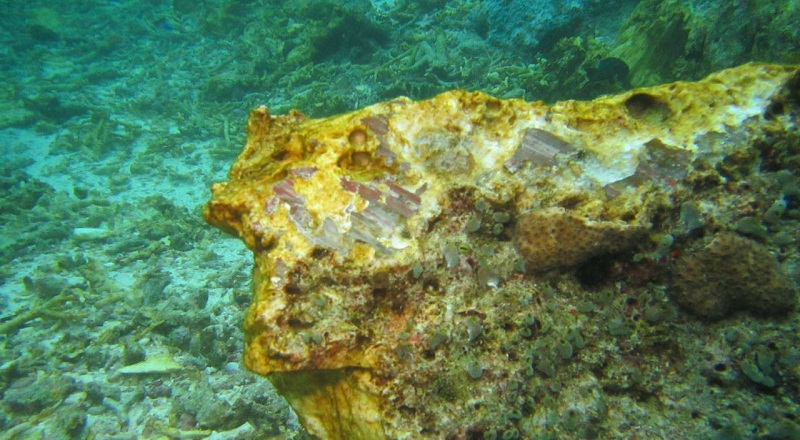 https: img.okezone.com content 2020 10 05 320 2288762 bakal-ada-pen-restorasi-terumbu-karang-ini-tujuannya-G5qEF4scGe.jpg