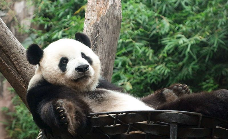 https: img.okezone.com content 2020 10 06 406 2289209 jalan-jalan-ke-taman-safari-jangan-lupa-16-protokol-kesehatan-wrJ7XrGia6.jpg