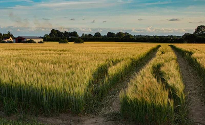 https: img.okezone.com content 2020 10 07 320 2289805 4-strategi-agar-sektor-pertanian-tetap-tumbuh-saat-resesi-BQKH9SdpCZ.jpg