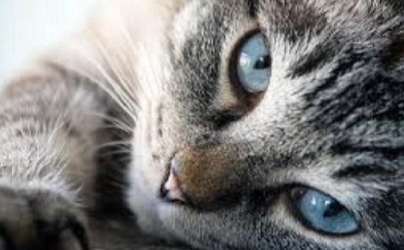 https: img.okezone.com content 2020 10 07 481 2289943 kucing-bikin-ibu-hamil-keguguran-mitos-atau-fakta-Rgz2rY5HDh.jpg