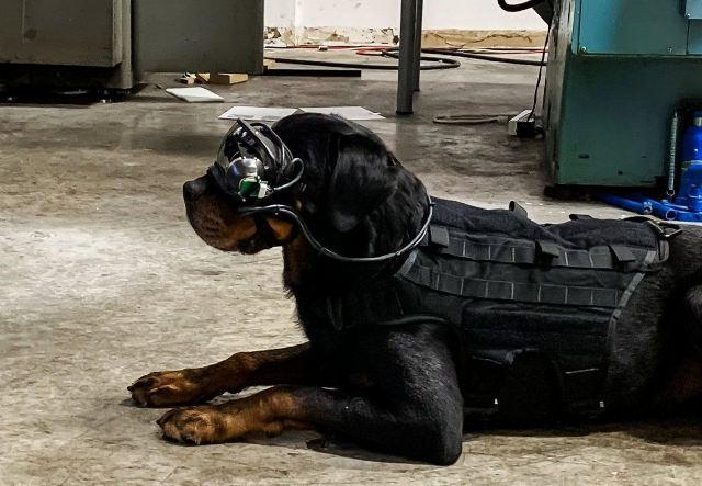 https: img.okezone.com content 2020 10 08 16 2290234 anjing-pelacak-ini-pakai-kacamata-ar-untuk-jalankan-misinya-eIZa44Im78.jpg