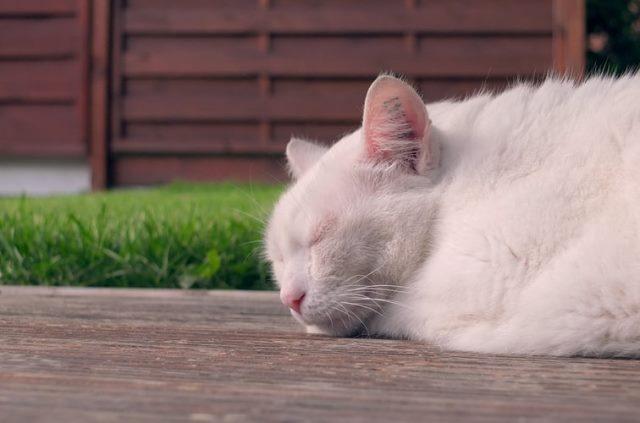 https: img.okezone.com content 2020 10 10 16 2291641 kucing-lebih-banyak-habiskan-waktu-untuk-tidur-ini-alasannya-uA8URJK77d.jpg
