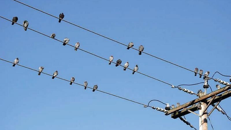 https: img.okezone.com content 2020 10 10 16 2291674 burung-tak-tersengat-listrik-saat-bertengger-di-kabel-kok-bisa-U0dd0hF9D5.jpg