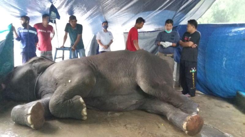 https: img.okezone.com content 2020 10 10 340 2291469 mati-setelah-rebahan-gajah-yanti-diduga-kena-racun-LSIUhKnAJd.jpg