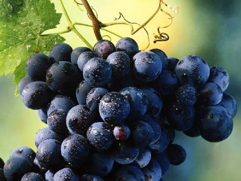 https: img.okezone.com content 2020 10 10 481 2291521 khasiat-anggur-hitam-cegah-kanker-hingga-meningkatkan-daya-tahan-tubuh-B4phZ4XCmR.jpg