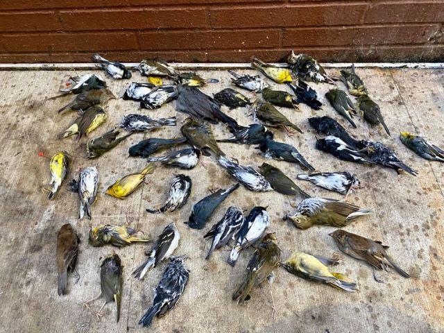 https: img.okezone.com content 2020 10 11 16 2291733 1-000-burung-mati-berjatuhan-dari-langit-eTW8iDrgRR.jpg