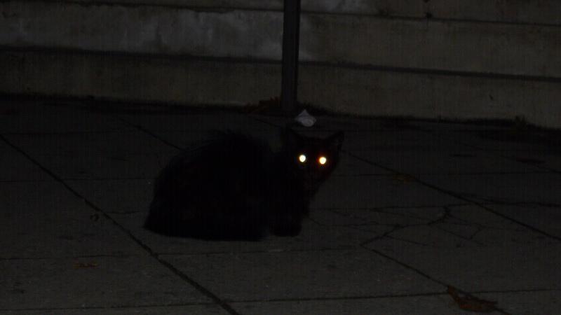 https: img.okezone.com content 2020 10 12 16 2292424 ini-penjelasan-mengapa-mata-kucing-tampak-menyala-di-malam-hari-rp1OCHrkOW.jpg