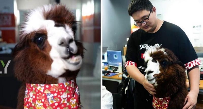 https: img.okezone.com content 2020 10 12 612 2292369 china-gunakan-hewan-baiwan-untuk-mengusir-stres-pada-karyawan-l13bVigD5L.jpg