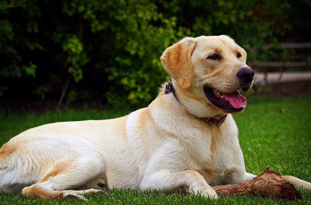 https: img.okezone.com content 2020 10 13 16 2292602 anjing-dan-kucing-ternyata-miliki-perasaan-berbeda-tentang-gosok-perut-YLOwnUj54b.jpg