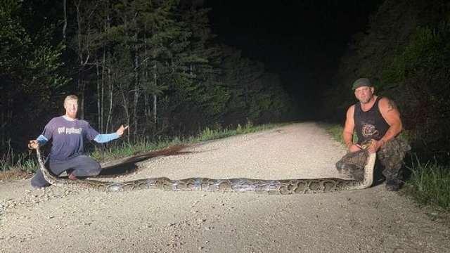 https: img.okezone.com content 2020 10 13 16 2293078 dua-pemburu-tangkap-ular-piton-burma-berukuran-paling-besar-iUgL66AxuE.jpg