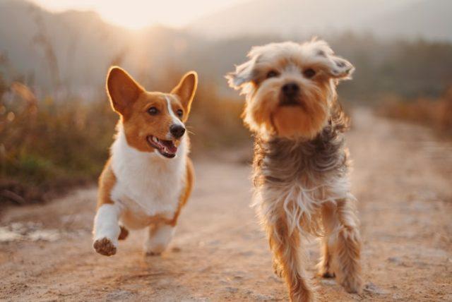 https: img.okezone.com content 2020 10 14 16 2293805 ini-alasan-anjing-sering-menggali-dan-mengubur-benda-KLctmgVIJY.jpg