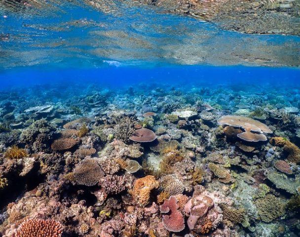 https: img.okezone.com content 2020 10 15 16 2293966 gugusan-terumbu-karang-terbesar-di-dunia-rusak-sejak-25-tahun-lalu-zLtlKB0F5M.jpg