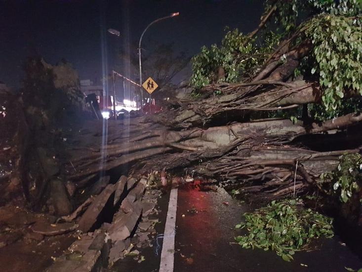 https: img.okezone.com content 2020 10 15 338 2294388 kota-bogor-dilanda-hujan-angin-3-pohon-besar-tumbang-ke-jalan-3CkGHXlneF.jpg
