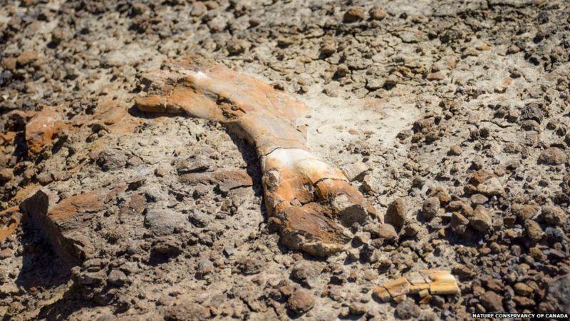 https: img.okezone.com content 2020 10 16 18 2294512 bocah-12-tahun-temukan-fosil-dinoasurus-langka-kPqpJs01SM.jpg