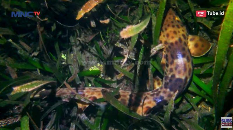 https: img.okezone.com content 2020 10 16 408 2294771 menjajal-night-dive-di-kota-ternate-bisa-lihat-walking-shark-fGPIuzsfKr.jpg